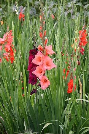 Blumenzwiebeln Tulpen Narzissen Krokusse Und Andere Blumenzwiebeln